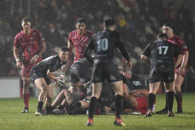 SERVICE: Scrum-half Tavis Knoyle spreads the ball out for the Dragons against the Scarlets in the December derby win
