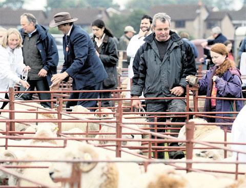BEST OF AGRICULTURE: Sheep pens and showjumping, below, were just a few of the highlights at the Bedwellty show last year