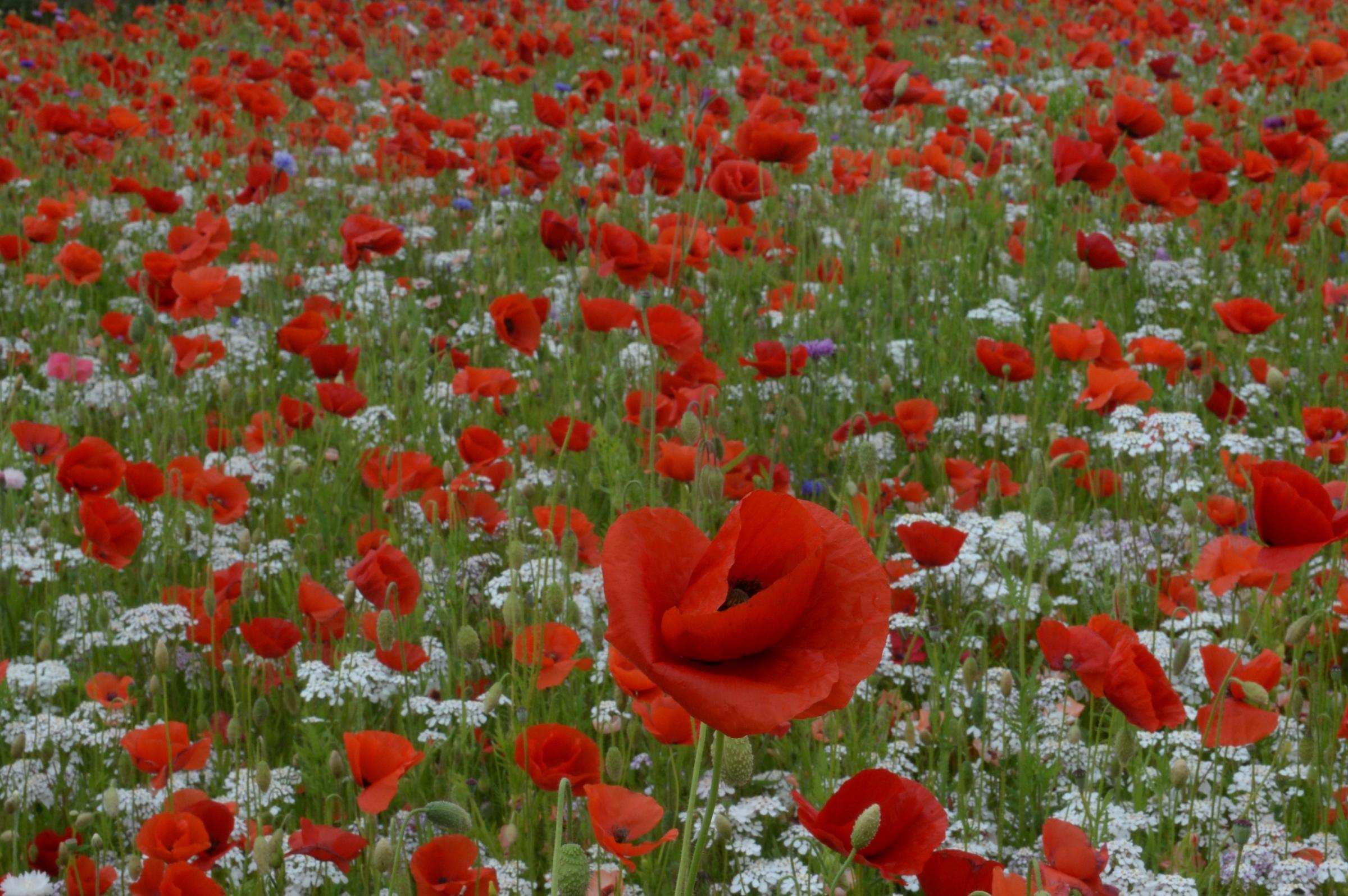 REMEMBERING THE FALLEN: Events being staged across the county borough